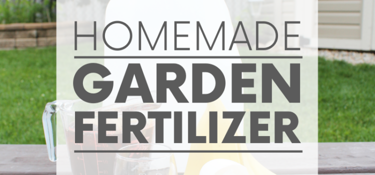 Banana peels, black tea, molasses and eggshell make up a super easy organic home garden fertilizer. Just add to an empty jug, mix with rainwater and go!