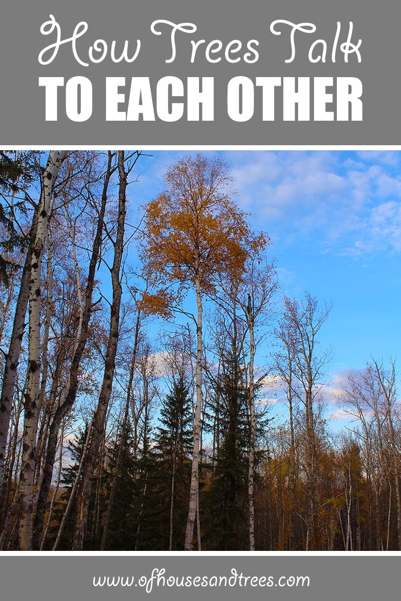 How Trees Talk To Each Other | We all know trees are living organisms, but did you know they can talk? Learn how trees talk to each other and how you can help them continue to do so.