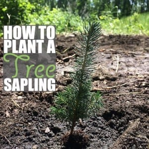 One of the best green living tips you can follow is to plant a tree!