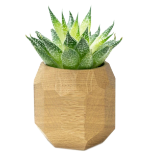 Here's how to create a modern boho living room, which balances the funky boho vibe with clean lines and neutral colours - and features beautiful decor like this geometric oak planter.