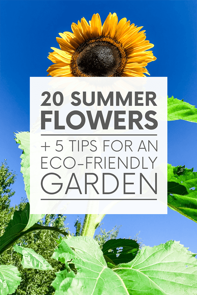 """A large sunflower in front of a blue sky with the words """"20 summer flowers + 5 tips for an eco-friendly garden."""" Click to visit post."""